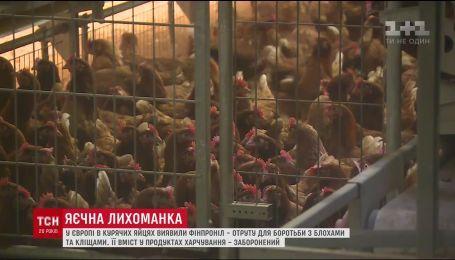 Нідерланди перевірятимуть курятину на вміст фіпронілу