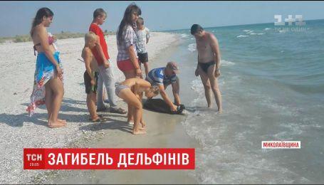 На пляже Кинбурнской косы на Николаевщине море выбрасывает тела погибших дельфинов