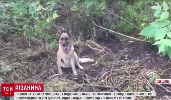 """Службовий собака """"розкрив"""" убивство юнака на Одещині"""