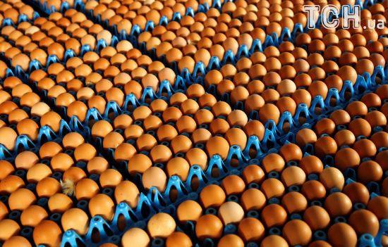 """""""Яєчний скандал"""": у ЄС планують покращити систему сповіщень про забруднення харчів"""