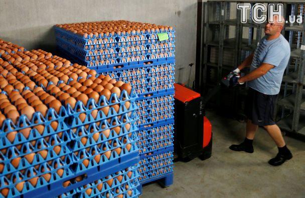 Яєчний скандал: як зараженый фіпронілом продукт з ферми в Нідерландах сколихнув Європу