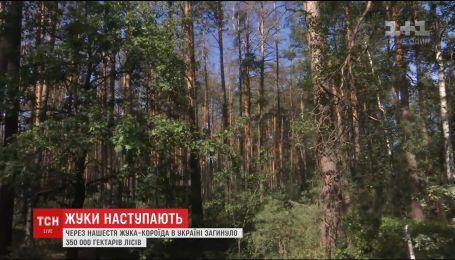 Нашествие жука-короеда в Украине уничтожило около 350 тысяч гектаров леса