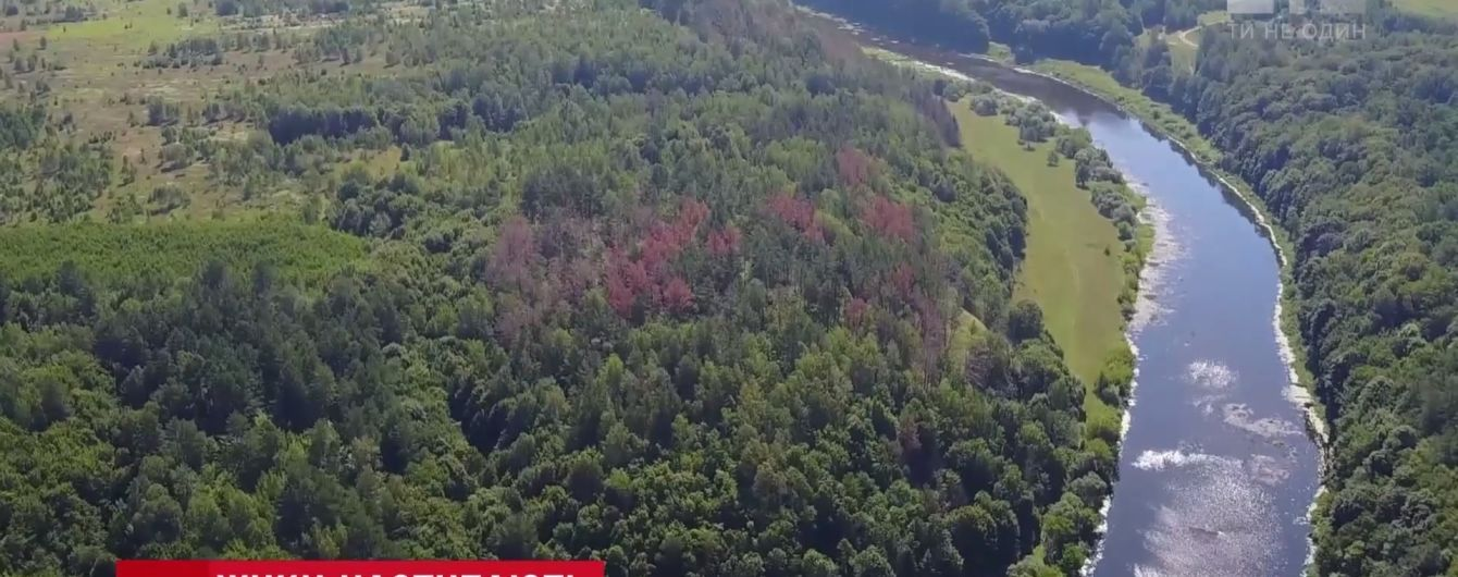 Масштабы впечатляют: жук-короед массово уничтожает украинские леса