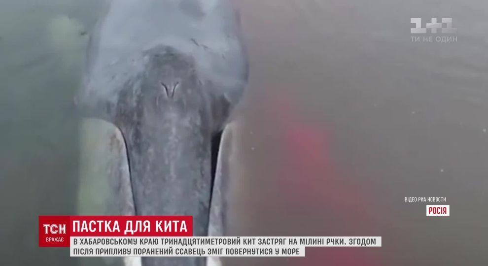 Спасли ли гренландского кита думаю, что