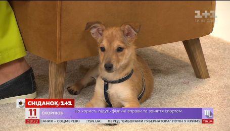 Ветеринар рассказал об особенностях ухода за щенками