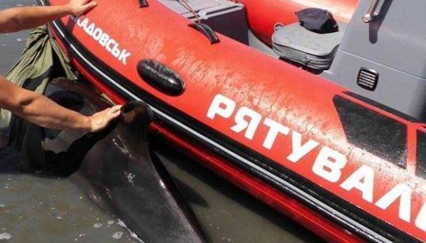 Рятувальна операція: на Херсонщині визволили дельфіна, який застряг на мілині
