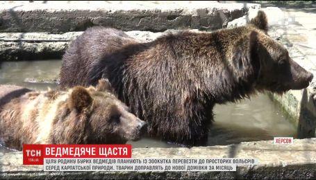Семью бурых медведей из Херсонского гидропарка хотят переселить в Карпаты