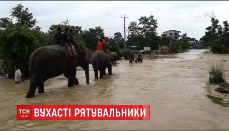 В Непале животные помогают вывозить заблокированных туристов из затопленного сафари-парка