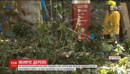 200-літній дуб убив 11 людей на португальському курортному острові Мадейра