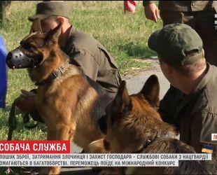На Львовщине служебные собаки Нацгвардии соревновались в ловкости и выносливости