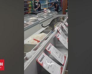 В киевском супермаркете кошка решила использовать емкость с сахаром как туалет