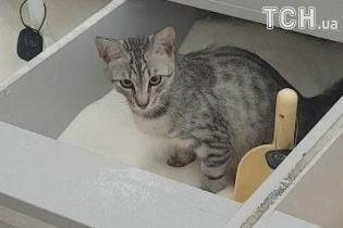 У київському супермаркеті зняли, як кішка використала ємність з цукром замість туалету