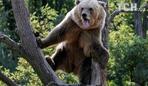 Купание, загар и развлечения. Как живут медведи в реабилитационном центре на Житомирщине