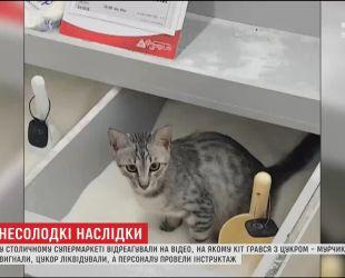 Кота, який надзюрив у цукор, прихистила працівниця супермаркету