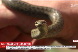 Метрова змія прикувала увагу школярів поблизу дитячого майданчика