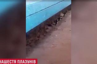 Метровая змея проползла возле детской площадки в Львове