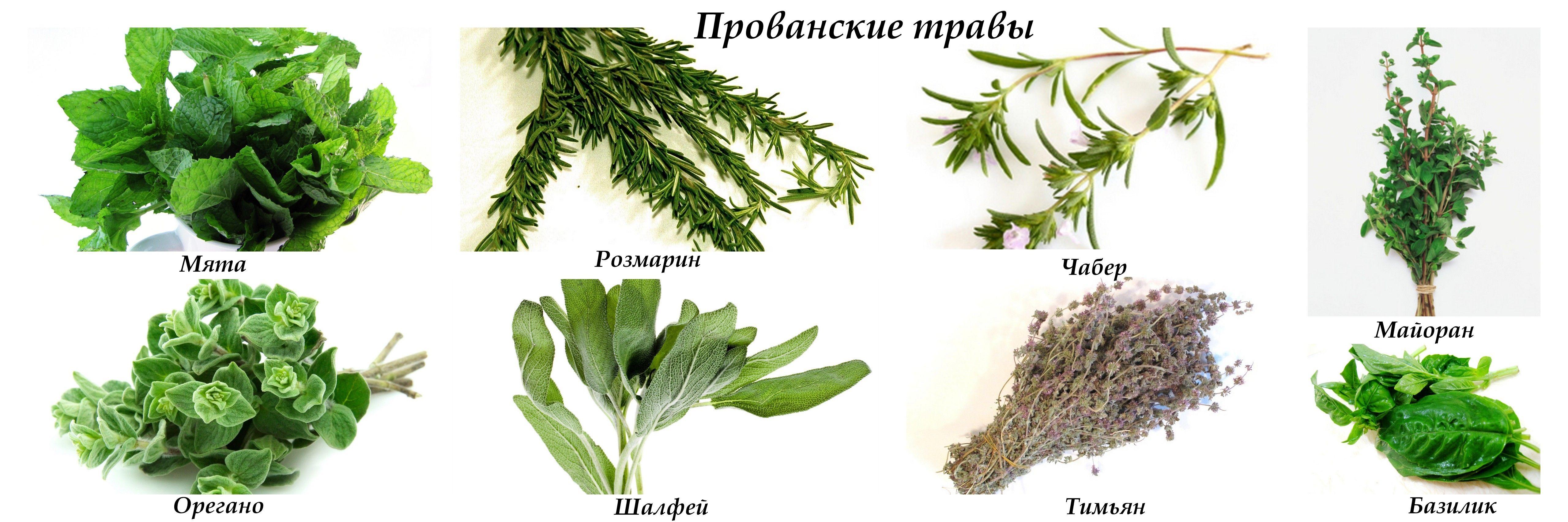 пряные растения с картинками нет котят, изображения
