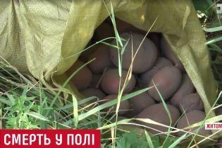 Переплутали з кабаном: на Житомирщині назвали першу версію вбивства жінки серед поля картоплі