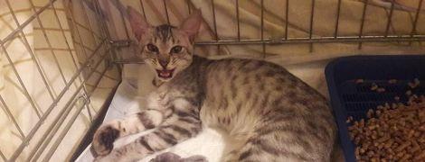 """Застудилася й чекає на господарів: стала відома доля зіркової кішки з """"Фуршету"""""""