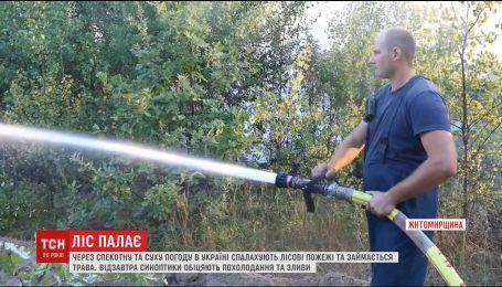 Загроза пожеж: через спеку надзвичайники попереджають про небезпеку 5-го класу по усій Україні
