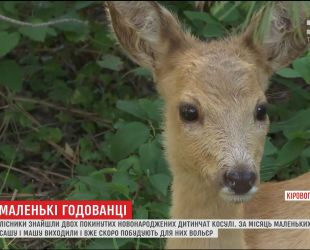 Лесники Кировоградщины нашли двух новорожденных брошенных детенышей косули