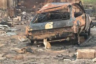На Донеччині пожежа майже повністю знищила ціле село – Жебрівський