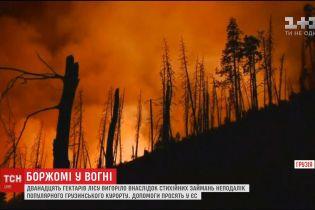 Боржомі у вогні: пожежа знищила гектари лісу неподалік із джерелом мінеральної води