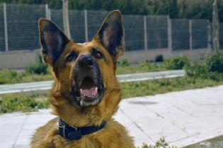 У Харкові чоловіка посадили до в'язниці за вбивство собаки