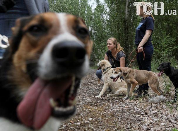 Сум в очах і жага до ігор: Reuters показало, як проводять вікенд собаки-безхатьки під Києвом