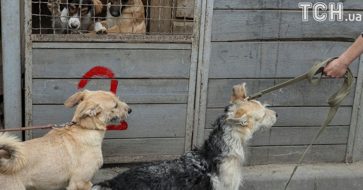 У собак кардинально змінюється настрій після того, як їх випускають надвір погуляти з людьми @ Reuters