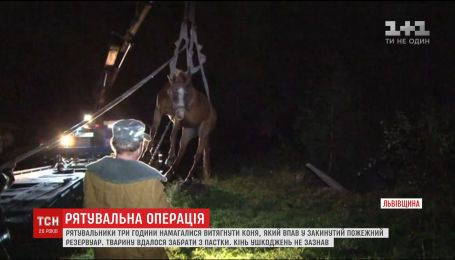 Біля Львова рятувальники три години витягали коня, який впав у пожежний резервуар