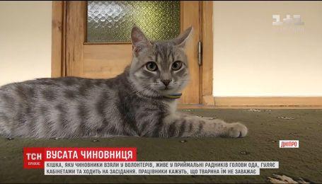 Працівники Дніпропетровської обладміністрації завели кішку, яка ходить на наради