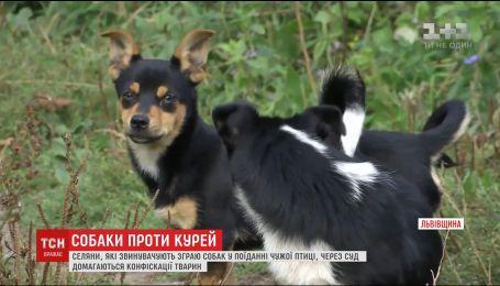 У селі на Львівщині розгорівся скандал через зграю псів, які їдять домашню птицю місцевих