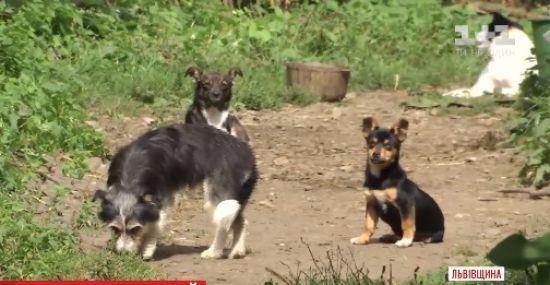 На Львівщині зграя собак тероризує ціле село