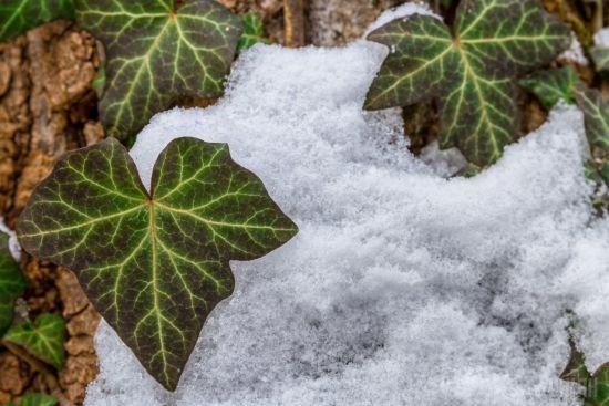 У Китаї на два місяці раніше сніг вкрив землю 10-сантиметровим шаром