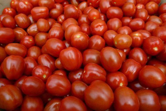 В Іспанії заготовили 160 тонн помідорів для щорічних боїв