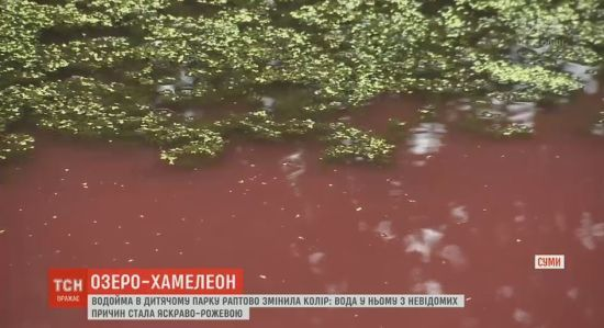 У Сумах люди нажахані рожевим кольором місцевої водойми