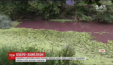 У Сумах озеро раптово забарвилося у рожевий колір