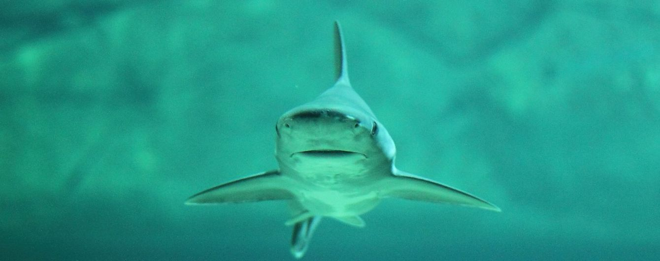 Во Флориде акула чуть не съела ногу водолаза