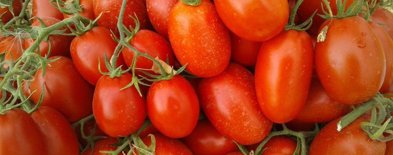 На Херсонщине с куста-рекордсмена собрали 165 помидоров
