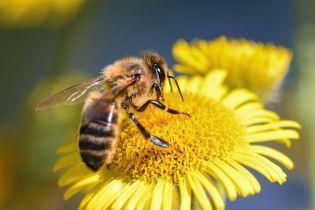 В Госпотребслужбе объяснили массовую и внезапную гибель пчел на Волыни