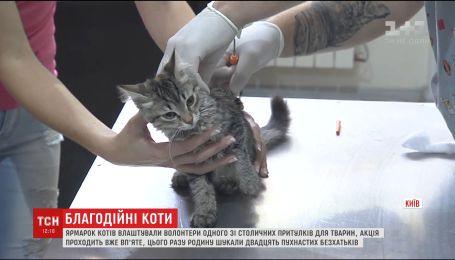 Один зі столичних притулків у неділю влаштував кото-ярмарок