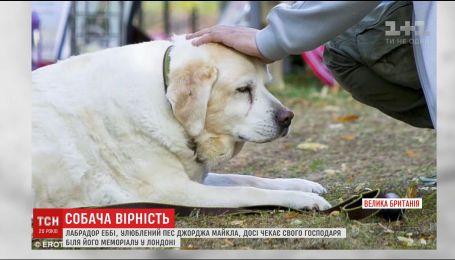 Світ зворушили знімки пса, який сумує за покійним господарем Джорджом Майклом