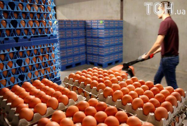 Яичный скандал: как зараженый фипронилом продукт с фермы в Нидерландах всколыхнул Европу