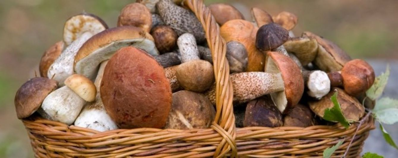 Грибы на кухне: как и с чем готовить лесной урожай