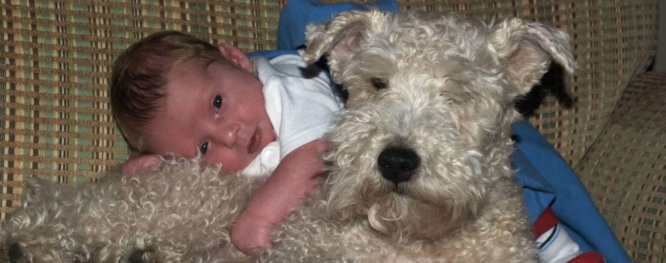 В Британии осудили мужчину, который пьяным прозевал смертельное нападение собаки на своего малыша
