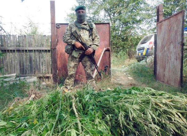 Одеські правоохоронці посеред озера випадково виявили плантацію коноплі