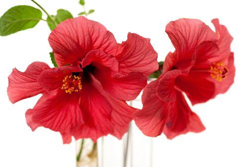 Комнатные цветы_4