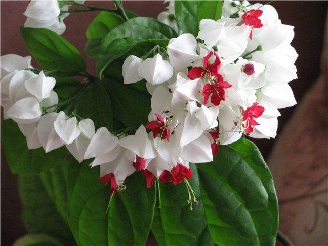 Комнатные цветы_10