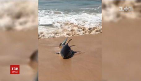 На австралийском пляже спасли маленькую белую акулу